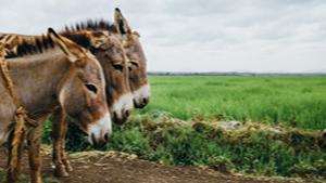 Kenyans sound alarm on donkey population - CHANNELAFRICA